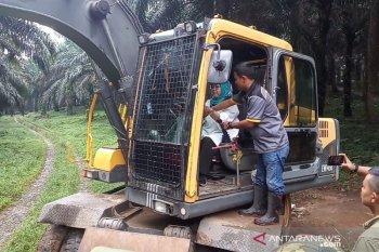 501 pohon dirobohkan untuk bangun huntap korban bencana di Bogor
