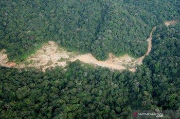Meski diizinkan Pemprov, Bupati secara tegas tolak tambang emas di kawasan hutan lindung