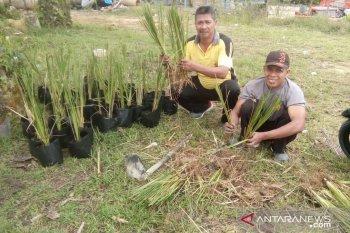 Polisi Bengkayang bibitkan rumput vetiver pencegah longsor