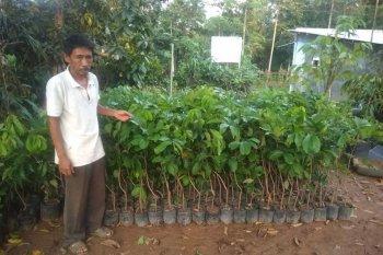 Cegah kepunahan, Petani Lebak lestarikan rambutan varietas tengkue