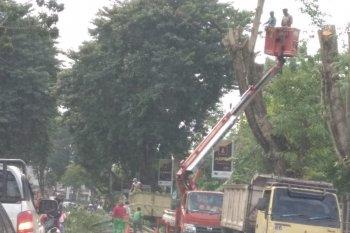 Petugas pangkas pohon