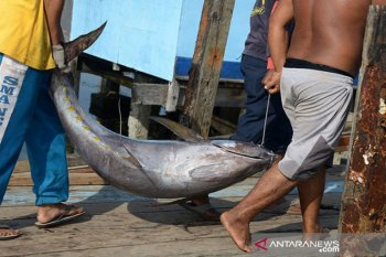 IKM Aceh keluhkan biaya kargo ekspor tuna ke Malaysia