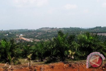 Pelepasan 35 ribu ha hutan disinyalir untuk tambang dan perkebunan