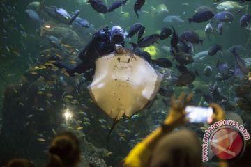 Hari Halloween Di Seaworld