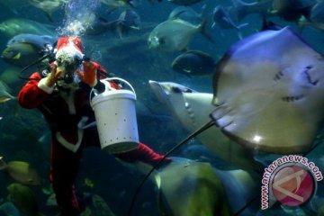 Pertunjukkan Sinterklas Dalam Air