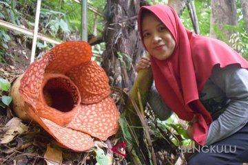 Rafflesia Gadutensis