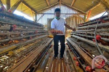 Cagub Ridwan Kamil tinjau peternakan ayam