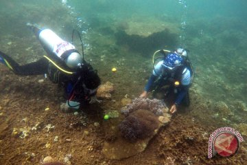 Rekor muri pengamatan biota laut