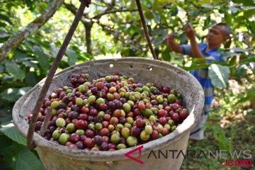 Produksi kopi nasional