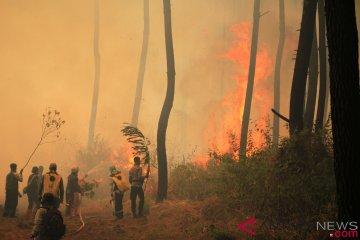 Kebakaran Hutan Gunung Ciremai