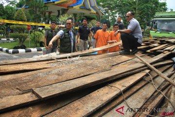 Pengungkapan Kasus Pembalakan Liar di Riau