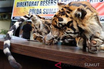 Kasus Perdagangan Kulit Harimau