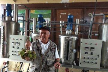 Kemiri Sunan, tanaman penghasil biodiesel pesaing sawit