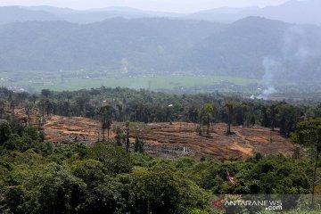 Pembukaan lahan di kawasan hutan