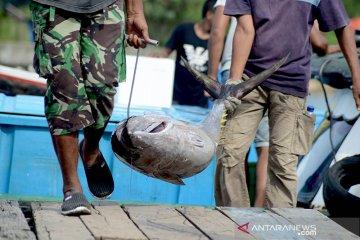 Tangkapan ikan tuna menurun