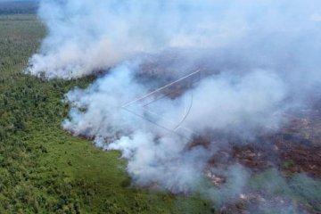 Kebakaran lahan gambut di Tanjung Jabung Timur