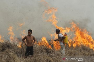Kebakaran Lahan Di Kalsel