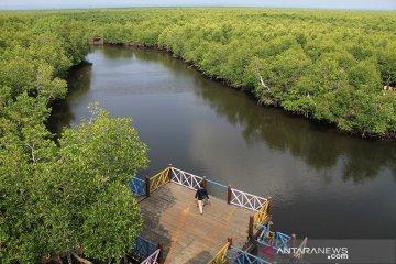 Belajar tentang lingkungan di hutan bakau Langsa