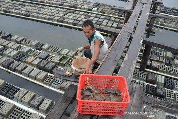Petambak keluhkan harga kepiting soka anjlok