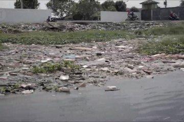 Ratusan bangkai babi cemari Danau Siombak