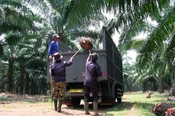 Biofuel sumber BBM baru Indonesia yang terbarukan