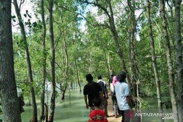 Wisata Mangrove, harapan baru warga pesisir Tanjungpunai Bangka Barat
