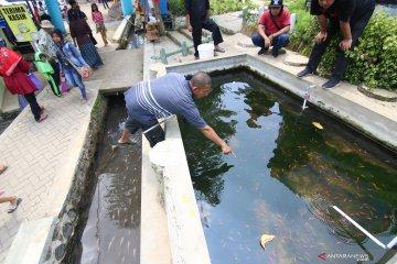 Budi daya ikan di saluran irigasi