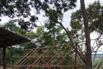 """""""Durian surga"""" itu jatuhnya di Mentok"""