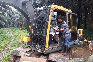 Relokasi korban bencana di Bogor perlu merobohkan 501 pohon