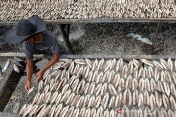 Pengolahan ikan kayu