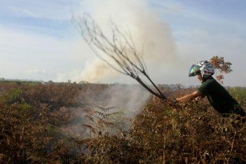Tiga hektare lahan gambut di Aceh terbakar