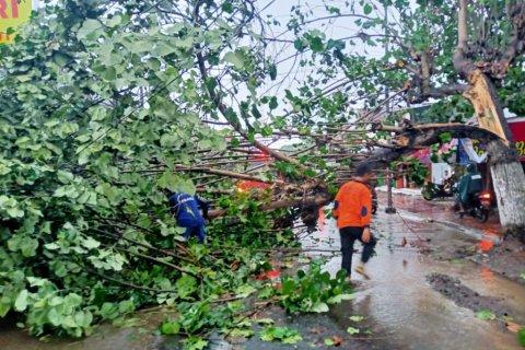 Hujan deras disertai angin kencang kembali melanda Jember