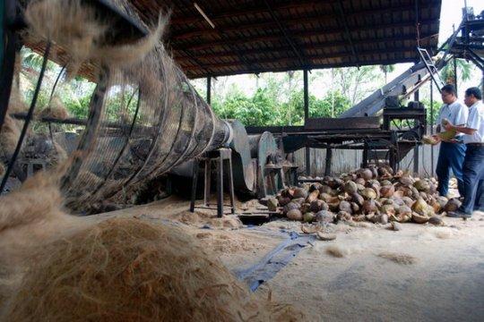Indragiri Hilir bakal pasok sabut kelapa ke industri otomotif