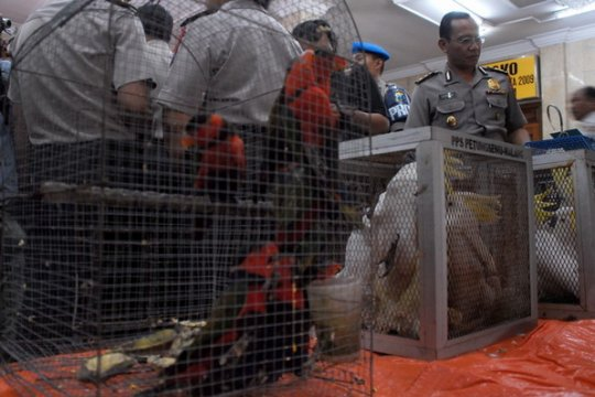 BBKSDA periksa kondisi 400 lebih burung langka sitaan di Jember