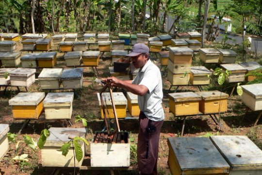 Disnakertrans Rejang Lebong latih warga beternak lebah madu