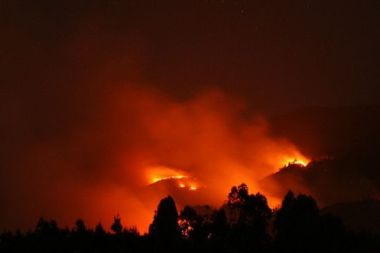 Kebakaran hutan Taman Nasional Baluran Situbondo macetkan jalur Pantura