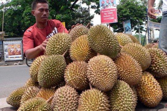 Kementan teliti durian varietas lokal Rejang Lebong