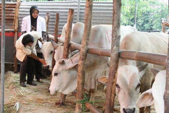 Pedagang hewan kurban diminta perhatikan kebersihan tempat