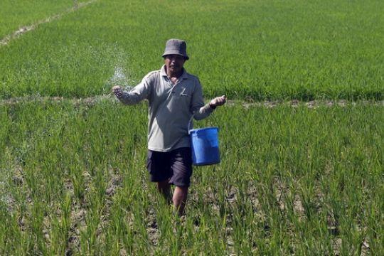 Kenaikan HET Pupuk urea telah disetujui Banggar DPR