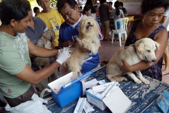 Bali anggarkan Rp9 miliar tanggulangi rabies