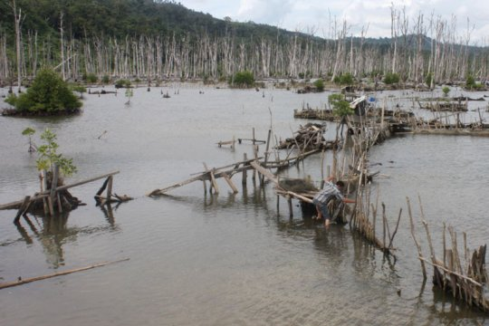 Luas mangrove Batam turun drastis