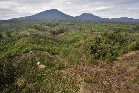 Aktivis lingkungan ragu laju eksploitasi hutan berkurang