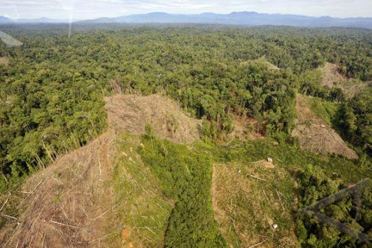 Perambah hutan kena denda satu kerbau di Jambi
