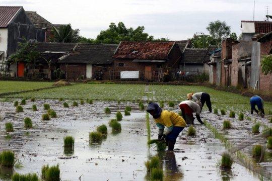 BPN: Lahan produksi pangan makin terbatas