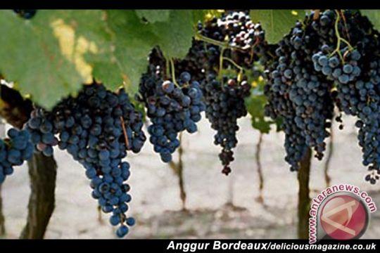 Pengusaha Indonesia berhasil raih peluang ekspor di Bordeaux