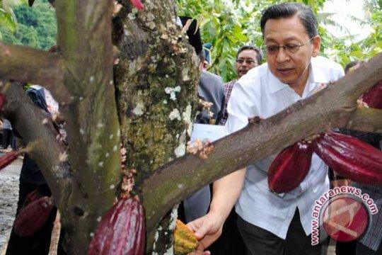 Wapres: Indonesia Harus Bisa Bangun Industri Pengolahan Kakao