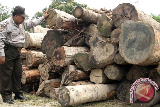 Polres Sintang amankan 2.000 batang kayu durian