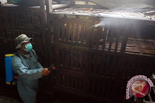 Cegah flu burung, Kementan-FAO inisiasi model pasar unggas bersih di Jabodetabek