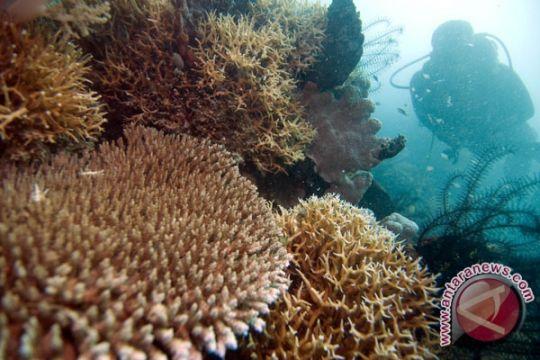 Ahok instruksikan Pemkab Kepulauan Seribu kembangkan budidaya ikan