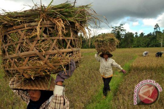 Artikel - Kegigihan petani Konawe bebaskan diri dari jerat rentenir